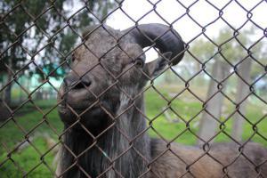 Большереченский зоопарк - взгляд питомцев на нас 11