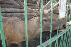 Большереченский зоопарк - взгляд питомцев на нас 13