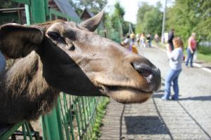 Большереченский зоопарк - взгляд питомцев на нас 16