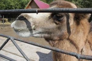 Большереченский зоопарк - взгляд питомцев на нас 18