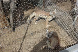 Большереченский зоопарк - взгляд питомцев на нас 22