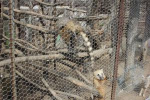 Большереченский зоопарк - взгляд питомцев на нас 23