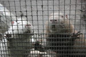 Большереченский зоопарк - взгляд питомцев на нас 24