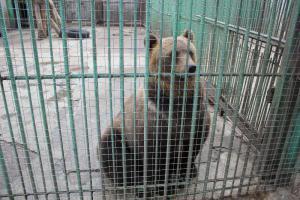 Большереченский зоопарк - взгляд питомцев на нас 25