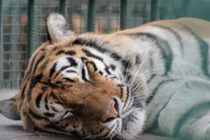 Большереченский зоопарк - взгляд питомцев на нас 26