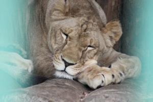Большереченский зоопарк - взгляд питомцев на нас 27