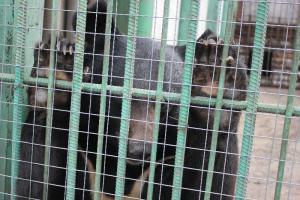 Большереченский зоопарк - взгляд питомцев на нас 32