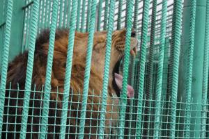 Большереченский зоопарк - взгляд питомцев на нас 35