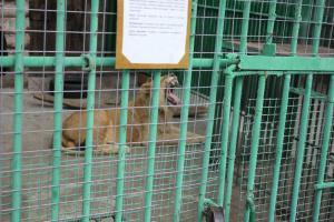 Большереченский зоопарк - взгляд питомцев на нас 37
