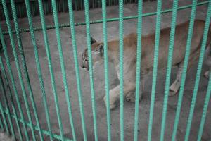 Большереченский зоопарк - взгляд питомцев на нас 38