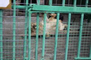 Большереченский зоопарк - взгляд питомцев на нас 39