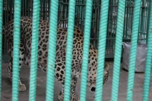 Большереченский зоопарк - взгляд питомцев на нас 44
