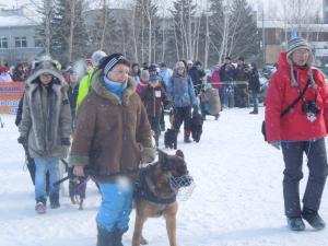 Кубок России в гонках на собачьих упряжках 1