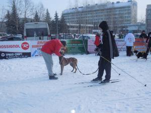Кубок России в гонках на собачьих упряжках 18