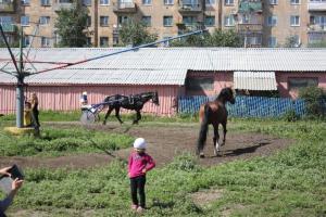 Всероссийский фестиваль орловского рысака Сибирь-2013 1